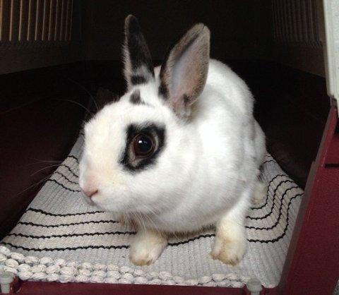 Dyrebeskyttelsen får melding om dumpede kaniner hver dag. Kaninen Emma ble funnet ute på tirsdag.