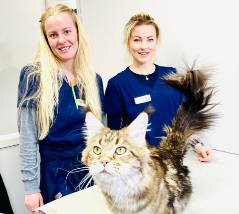 Hunder og katter kan smittes av flåttbårne sykdommer og bør få forebyggende behandling som forskrives av veterinær.