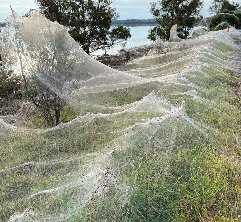 Edderkoppene har kjempet seg bort fra flommen.