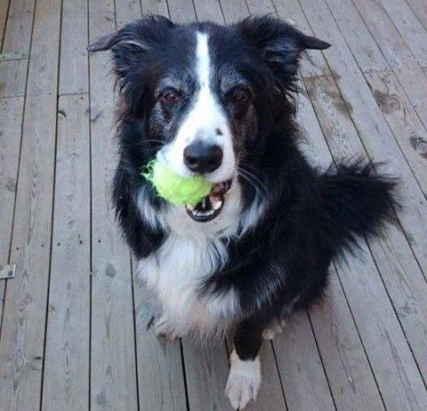 DIESEL (8): På nyttårsaften døde Diesel. Ifølge hundeeieren var det på grunn av stress etter rakettsmell gjennom hele dagen.