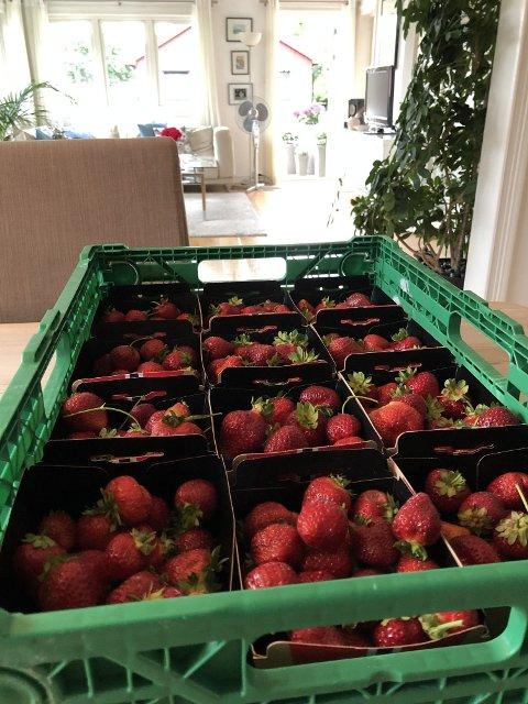 Skammelig å sortere ut råtne bær?