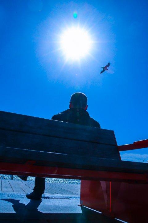 Under sol, blå himmel og en måke, under en mann seg en hvil, på Aker brygge. Foto: Vidar Ruud / NTB scanpix