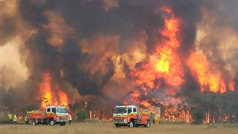 De voldsomme skogbrannene i Australia kan føre til varige skader på dyrelivet. Opp mot 100 arter er truet av full utryddelse, frykter forskere.