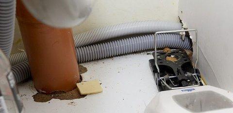 NØDVENDIG: Personalet finner stadig rotter som har gått i fellene i kjøkkenbenken. På grunn av rottene kan de heller ikke ha bossdunken stående i benken.