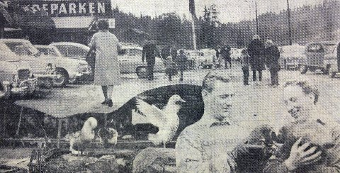 SESONGÅPNING: Publikumstilstrømningen var stor. Nederst til høyre på fotomontasjen, ser vi dyreparksjef Odd Fornebo og dyrepasser Knut Strømmer med to av jervungene. Faksimile: Østlandets Blad 24. april 1963.