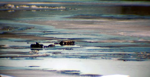 Dette bildet er tatt ved Landfalløya onsdag ettermiddag. Ifølge fotografen skal det ha vært store, klumpete oljedammer på isflakene, som umulig kan stamme fra svanene i seg selv.