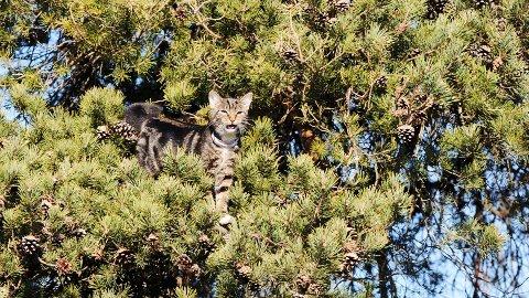 Musseli var flink til å klatre opp, men ikke fullt så sikker på hvordan hun skulle komme ned fra treet.