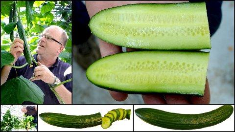 Dette er en agurkssak, men kanskje du lærer litt.