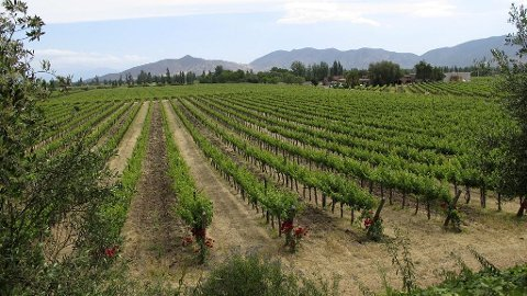 Maipo Valley.