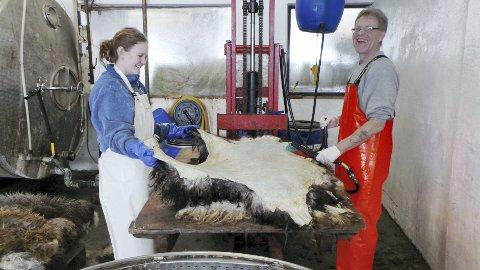 Fett: Hilde Haraldsen og Uwe Becker smører fett på saueskinn. De trives godt i lag.