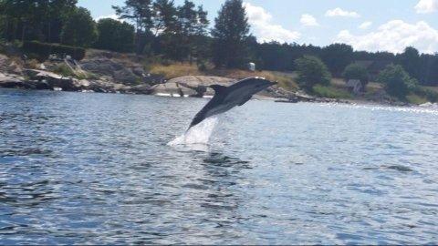 Therese Cecilie Nilsson fanget delfinen med kamera rett utenfor Kleberget.
