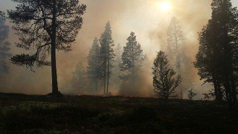 Bilde fra skogbrannen i Rendalen lørdag.
