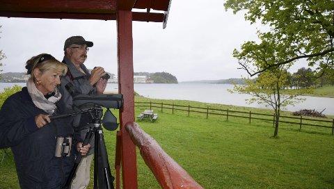 FUGLEKIKKING: Marianne Ottdal og Svein Andersen har sett fiskeørn på Holmen nesten daglig i det siste.Foto: Morten Børsum