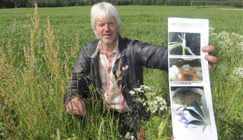 NOE Å SATSE PÅ: Gudmund Gjerdrum har tro på hampproduksjon i Solør-landbruket. Lørdag er det stort informasjonsmøte om saken.
