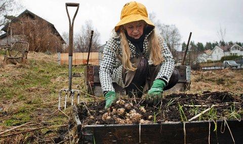 Mona Vestli bruker pallekarmer som opphøyede bed til å plante bær, grønnsaker og urter i.