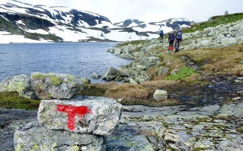 Fotturister på T-merket sti mellom Hellevassbu og Middalsbu på Hardangervidda.