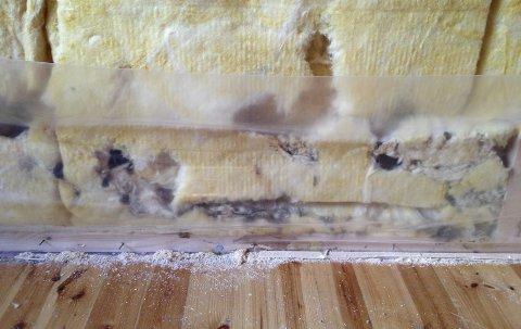DYR MUS: Skadene etter en museinvasjon i et bolighus i Ullensvang er taksert til 592.000 kroner. Nå har Hardanger tingrett dømt selgerne til å gi prisavslag.FOTO: HELP Forsikring AS
