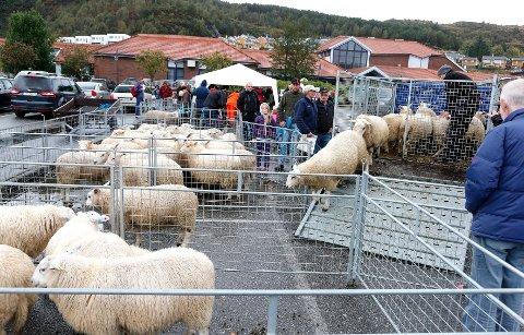 Værlam: Kåring under landsbyfesten. Foto: Alfred Aase