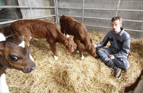 Nærkontakt: Anders Bakken har det trivelig når han får stelle kalvene.