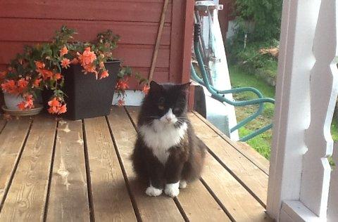 «Tjukken» har opplevd mye og er nå inne i sitt 23. leveår. Er den landets eldste katt?