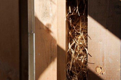 MILJØVENNLIG ISOLASJON: Halmen som ligger som isolasjonsmateriale i veggen, er et restprodukt etter korndyrking.
