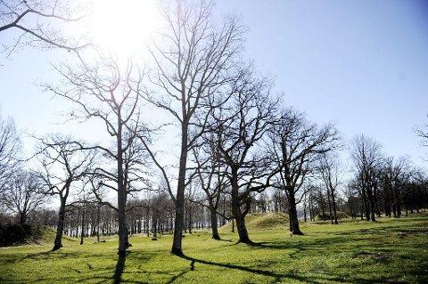 Vestfold fylkeskommune ønsker å få blant annet Borrehaugene på UNESCOs verdensarvliste.