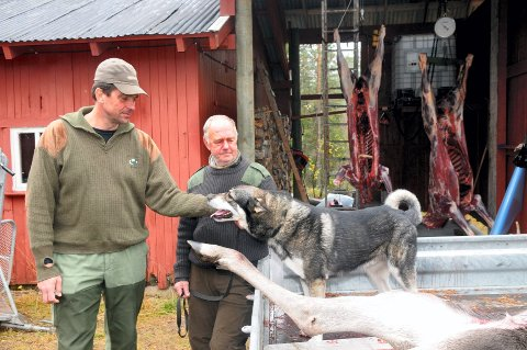 Hundeeier Kåre Nilsen (t.h.) mistet hunden sin, etter at en ulv angrep den i går. Her er han sammen med grunneier Gunnar A. Gundersen.
