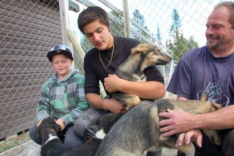 NYE STJERNER: De tre måneder gamle valpene er de kommende stjernene i Bråtens hundespann. De starter treningen seks måneder gamle.