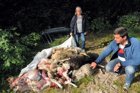 – Forvaltningen har ikke kontroll. Slike hendelser er helt uakseptable, sier stortingsrepresentant Gunnar Gundersen, som i helga besøkte Nini Lauten i Åsnes. Her er de ved kadaverhaugen etter ulveangrepet natt til fredag.