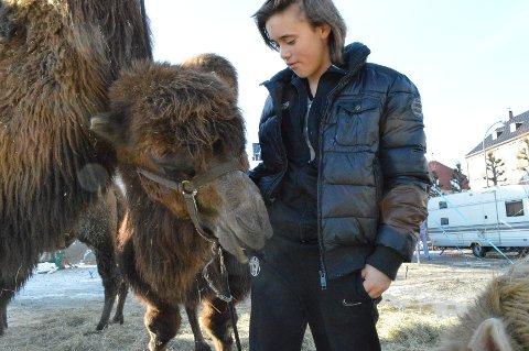 Kamelene til Amedeo Folco er sultne på alt fra dyrepasserbukser til journalistblokker. Og ikke minst er de sultne på nye runder foran publikum, mener Folco.