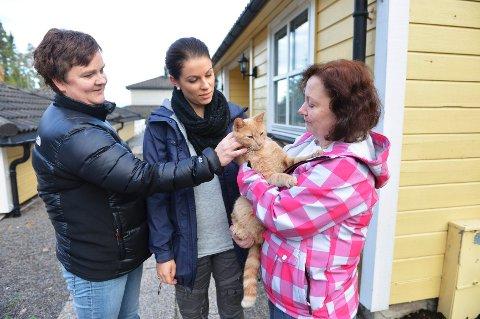 Anette Bang, Tina Pedersen og Hilde Gjengaar er blant katteeierne som frykter at noen kan ha forgiftet kattene i nabolaget.