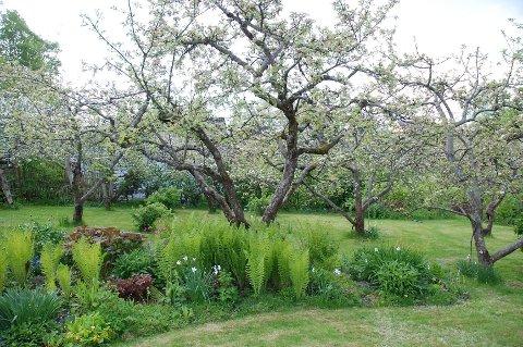 Plenen kan vokse seg grønn og fin selv om du ikke bruker kunstgjødsel.