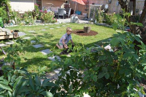 Den lille gressflekken der Julian (9) og familiehunden Bastian koser seg, er omgitt av roser på alle kanter.