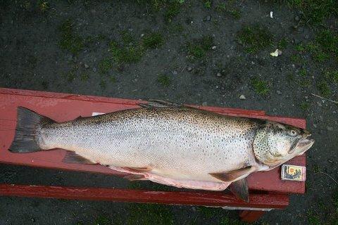 Professor Bjørn Olav Rosseland anslår at fisken kan være mellom 15 og 25 år gammel.