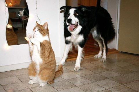 Maler er endelig hjemme igjen og hunden Timmy er begeistret. FOTO: LINE RUNDMO