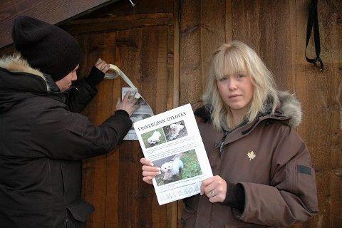 Cecilie Andrea Torp fra Nordstrand og Stian Pedersen fra Kværner bruker all sin tid på å lete etter hunden Stewie, som har vært borte i mange dager.