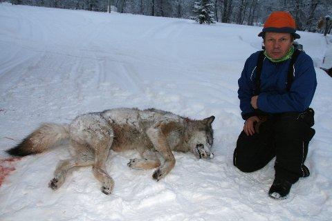 Leder i Elgå reinbeitedistrikt Jon Anders Mortensson er ikke fornøyd med ulvens aktiviteter i reinsdyrflokken i Elgå.