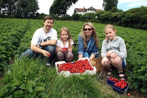 Familien Linde bor i Gudbrandsdalen, men plukker jordbærene på Aaby gård i Asker. F.h.: Ketil, Kristina, Veslemøy og Sofie Linde.