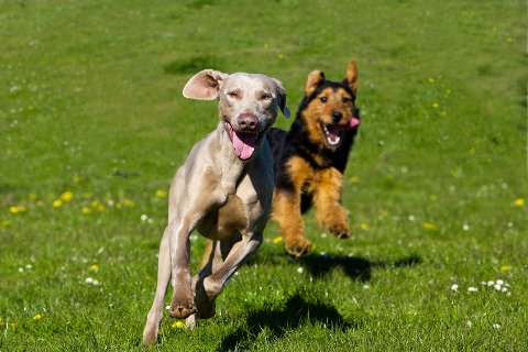 Mange av våre lesere, både med og uten hund, er enige at mange er slurvete med bruk av bånd på sin kjæledegge.