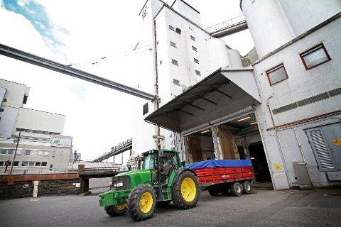 Fra nå og utover kommer mange hundre traktorlass til mølla for å levere korn.