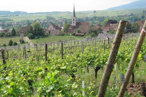Fra Alsace. Foto: Tom Karlsen.