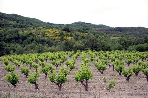 Vinmark i Marcillac.