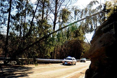 Vinden herjet natt til lørdag i våre kommuner også. I Lier blåste dette treet over Vestsideveien. Strømledninger hindret treet i å falle i bakken og sperre veien helt.