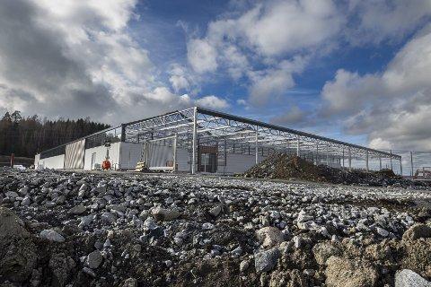 BYGGMESTER: Petter Lundeby har sørget for milliardinvesteringer ved Nygårdkrysset, der blant annet Plantasjen etablerer seg.   FOTO: BJØRN V. Sandness