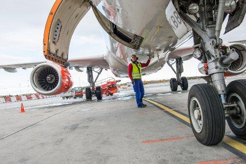 Hos SAS blir dyrene som regel plassert i lasterommet foran i flyet.