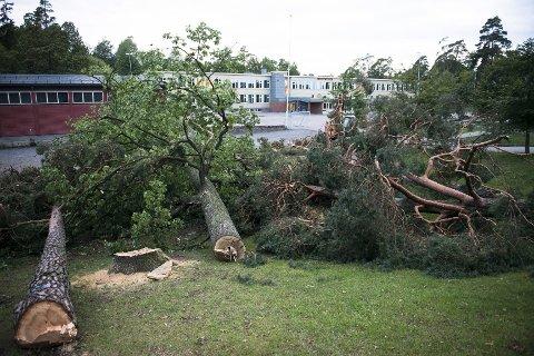 MÅTTE VEKK: I alt 10 trær er tatt ned for å gjøre plass til drop-sonen. FOTO: KJETIL BROMS