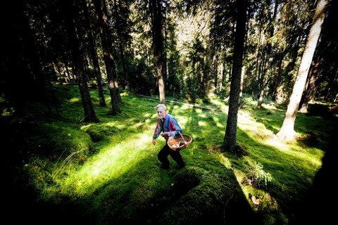 Jakter på skogens delikatesser: – På sopptur veit man aldri hva man med sikkerhet finner. Det gjør jakten så spennende, mener soppkontrollør Arill Bråthen som gjerne går gjennom fangsten din for å sjekke at den er trygg.