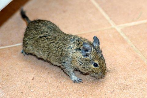 Vil du bekjempe mus, må du skaffe deg åtestasjoner.