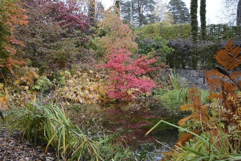 Høstprakt: Det fantastiske fargespillet gjør høsten ekstra vakker i hagen.