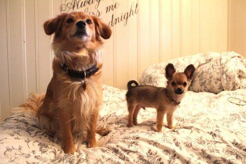 De to hundene Nala og Jackson er viktige midtpunkter i Drammen-bloggerens liv.